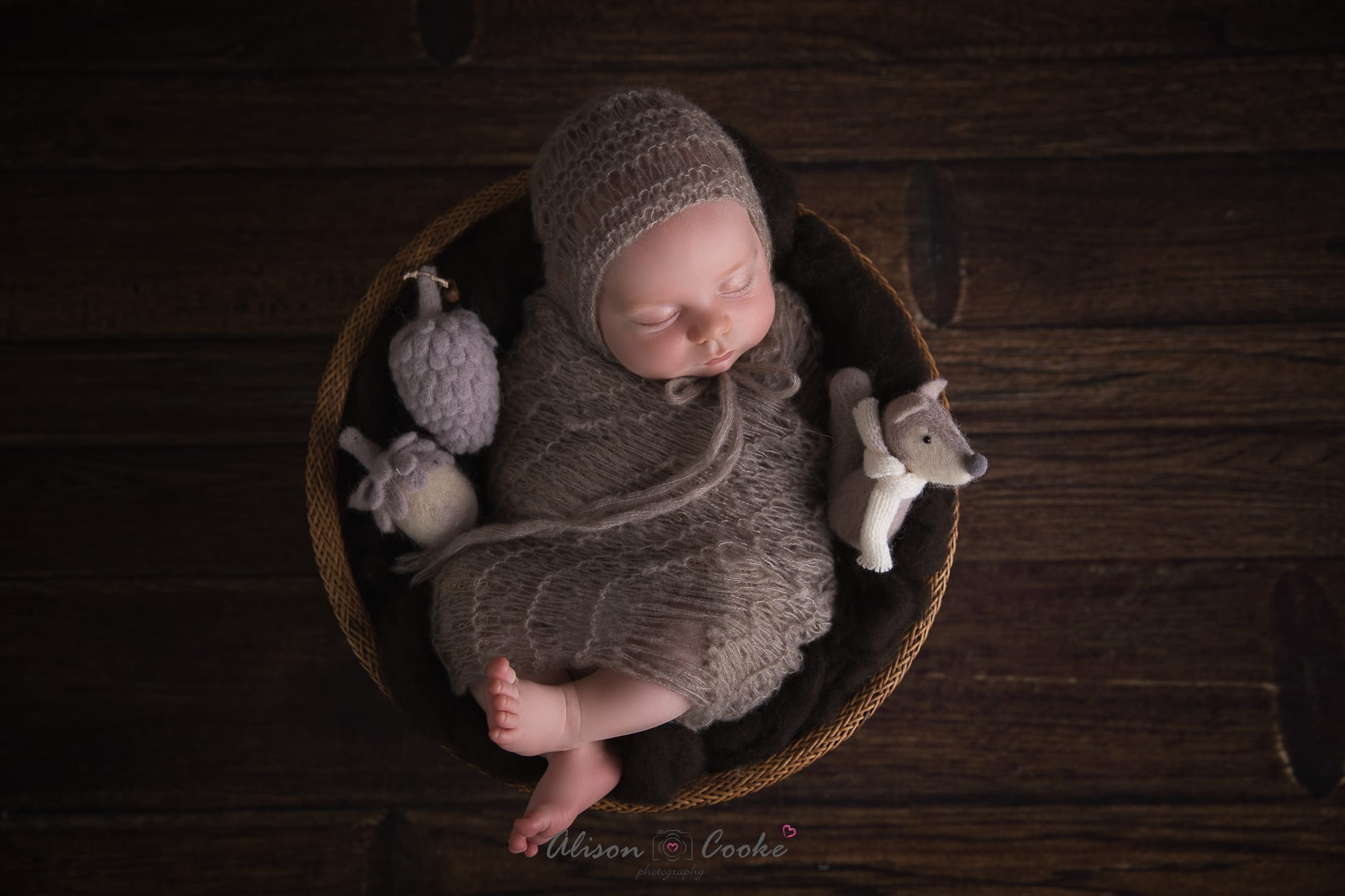 north brisbane newborn photographer