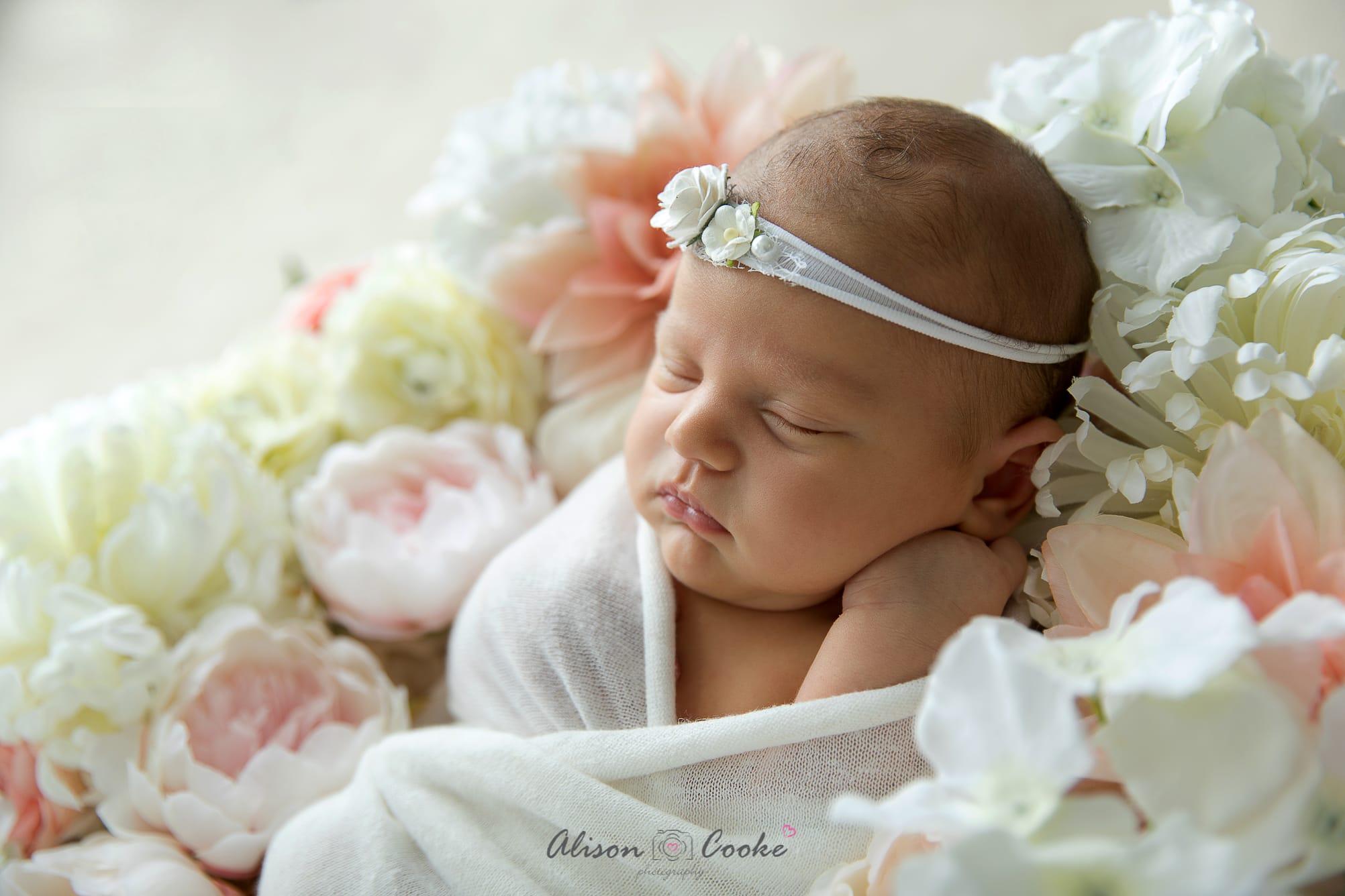 North brisbane newborn photographer newborn archives
